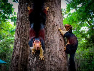 kerala wildlife tour adventure tour